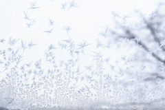 Frosted glass at -5 Celsius degrees. Winter at the Krasnodar, south Russia Stock Images