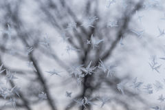 Frosted glass at -5 Celsius degrees. Winter at the Krasnodar, south Russia Royalty Free Stock Photo