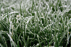 Frosted grass. Royalty Free Stock Image