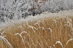 Frosted grass in the morning Stock Photography