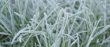 Frosted grass close up Royalty Free Stock Photos