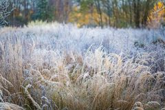 Frosted grass at cold winter day Royalty Free Stock Images