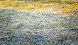 Frosted grass at cold winter day Stock Images