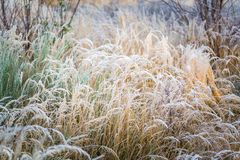 Frosted grass at cold winter day Royalty Free Stock Photography