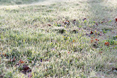 Frosted Grass and Leaves Stock Photography