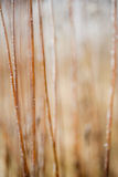 Frosted grass and plants Royalty Free Stock Photos