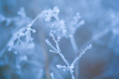 Frosted grass and plants Stock Photography
