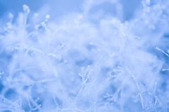 Frosted grass and plants Royalty Free Stock Photography