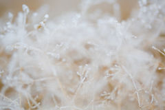 Frosted grass and plants Stock Image
