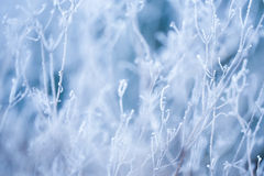 Frosted grass and plants Stock Images