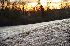 Frosted grass at sunrise Royalty Free Stock Image