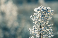 Frosted grass Stock Photos