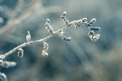 Frosted grass Stock Photography