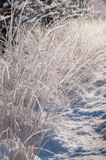 Frosted grass twinkling in sunlight Royalty Free Stock Photography
