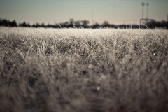 Frosted Grass Royalty Free Stock Photography