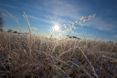 Frosted Grass Stock Image