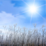 Frosted grass and winter sun Royalty Free Stock Images