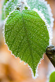 Frosted green leaf. With brown background Royalty Free Stock Photos