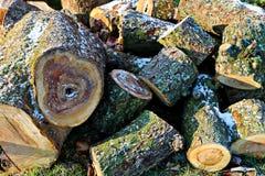 Frosted kawałki drewno Obraz Royalty Free