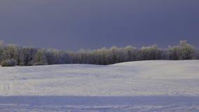 Frosted krajobraz Zdjęcie Royalty Free