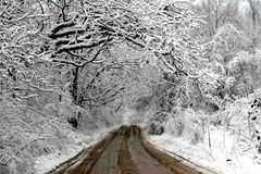 Frosted Lane. Country road in rural Michigan with snow-frosted trees running along both sides Stock Image