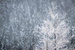 Frozen trees in the misty winter scenery Royalty Free Stock Photo