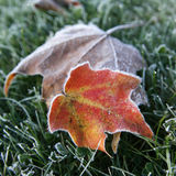 Frosted Leaf Stock Image