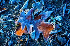 Frosted leaf background. Frosted autum leaf - abstract natural background Stock Image
