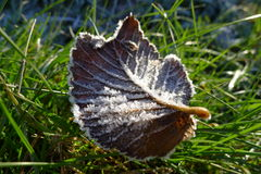 Frosted leaf. A frosted leaf with beautiful crystals on grass Royalty Free Stock Images