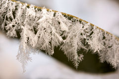 Frosted leaf. Frozen leaf with crystals - winter Royalty Free Stock Photo