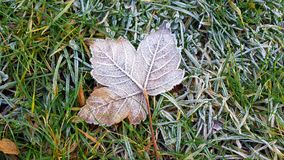 Frosted leaf. On the frozen green grass Royalty Free Stock Photography