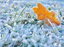 Frosted. Leaf on grass Stock Image
