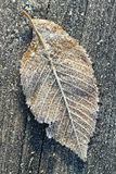 Frosted leaf in a morning. Frosted leaf on a wooden surface Stock Photos