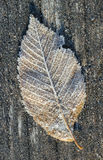 Frosted leaf in a morning. Frosted leaf on a wooden surface Royalty Free Stock Photos