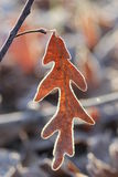 Frosted Leaf. A leaf outlined with frost dangling from a branch Stock Photos
