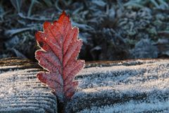 Frosted leaf. A frosted leaf stuck in garden border boards, lit by evening sun Stock Photography