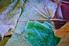 frosted leaves Royaltyfri Fotografi