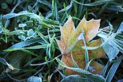 frosted leaves Royaltyfria Bilder