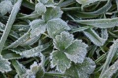 frosted leaves στοκ φωτογραφία με δικαίωμα ελεύθερης χρήσης
