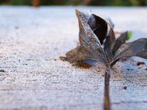 Frosted leaves on the snowy table. Frosted leaves on the snowy table with empty space for the text royalty free stock photos
