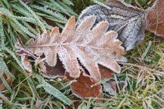 Frosted liść Zdjęcie Royalty Free