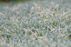 Frosted meadow. Grass with white frost in first morning light Stock Photo