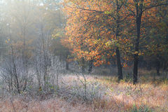 Frosted meadow in autumn forest. Frosted meadow in autumn morning forest Stock Photo