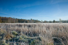 Frosted meadow landscape with blue sky Stock Photo