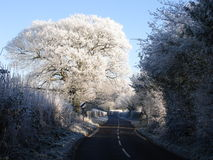 Frosted oak by English country lane. Hoarfrost on English Oak beside a Worcestershire country lane Stock Photos