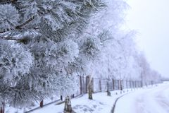 Frosted pins of ice on trees. Winter weather - frosted pins of ice on trees and snow Royalty Free Stock Image