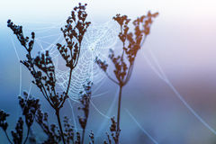 Frosted plants with cobweb Stock Images