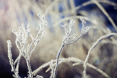 Frosted plants Royalty Free Stock Photo