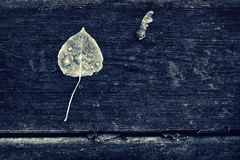 Frosted Poplar Leaf and Maple Key - Sepia Royalty Free Stock Photography