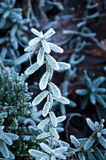 Frosted small plant Royalty Free Stock Photography